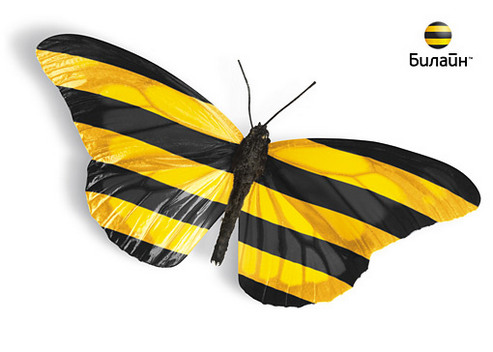 Эта бабочка несет мои деньги в WebMoney
